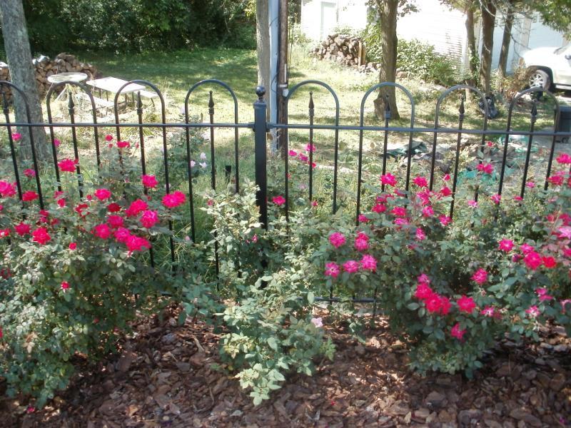 Victorian Hoop Style Iron Fence