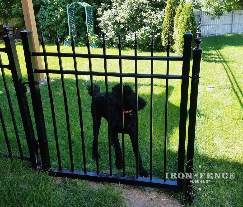 Our Infinity Aluminum Fence is a Stylish way to keep the Family Dog in the Yard!